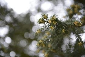 Nikon D4 sample image